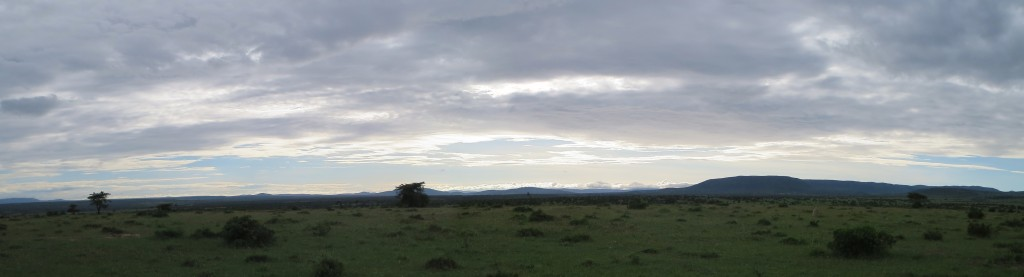 Quiet cool morning in the Mara